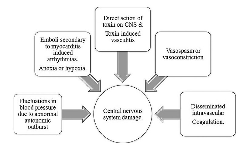 View image figure 3 graphic illustration showing mechanisms by central nervous system damage can occur following scorpion envenomation ccuart